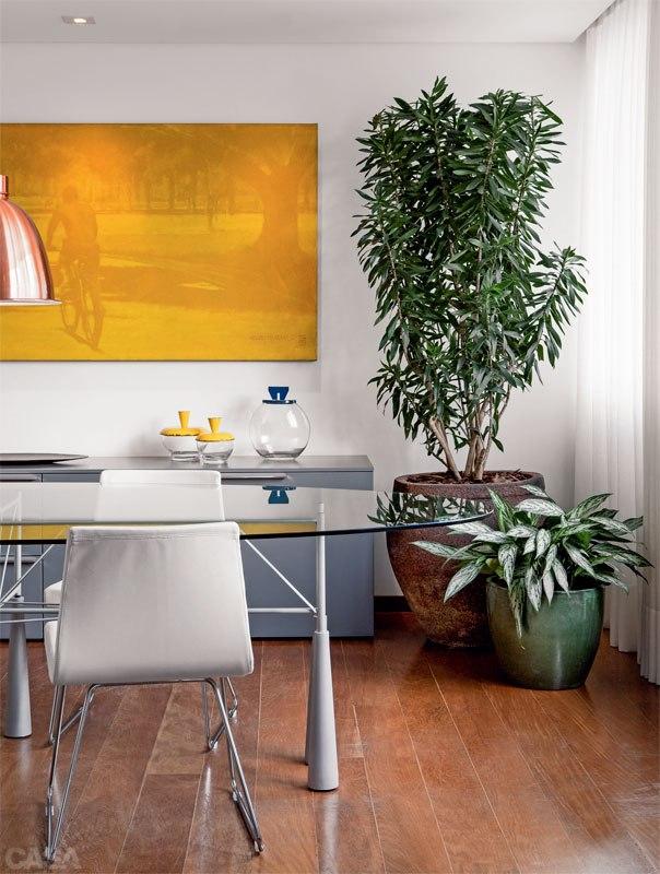 06-plantas-dentro-de-casa-quais-usar.jpeg